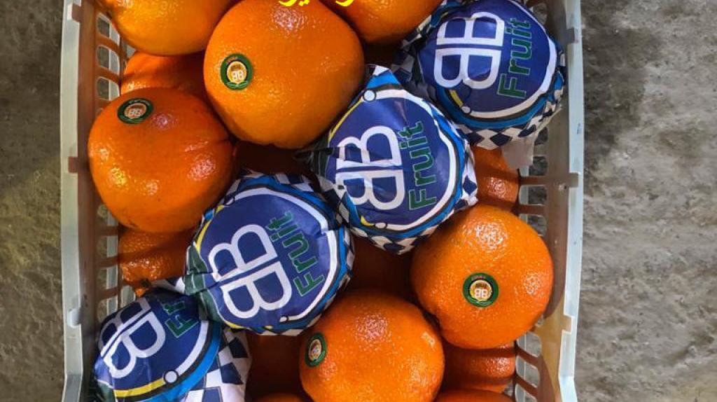 صادرات میوه